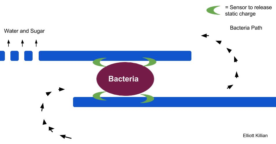 A membrane diagram to kill elm phloem necrosis or bacteria in a tree or suspended liquid. The bacteria flows through and next to two parallel lines, which show the membrane. Sensors are on the lines. When the sensors detect the bacteria electricity is released killing the bacteria. Water and sugar is free to flow through the membrane. Elm Yellows. Nano-electroporation.