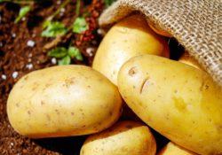 potatoes late blight