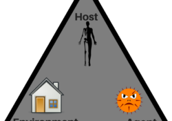 Human Disease Triangle. It has a human as the host, a bacteria or virus as the pathogen or agent, and a home as the environment. All three are needed for a disease.
