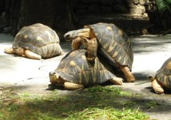 Biological Sex Mysteries, turtles sexually reproducing,