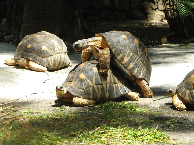The Biological Sex Mystery , turtles sexually reproducing,