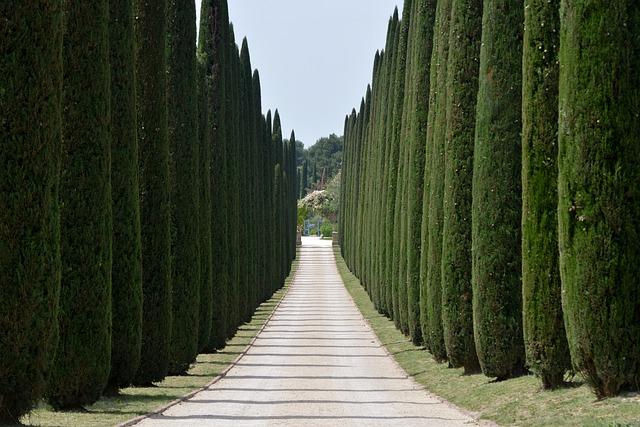Cypress canker disease.